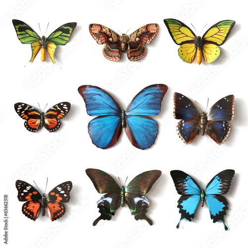 Deurstickers Vlinder Stuffed insects Butterfly collection
