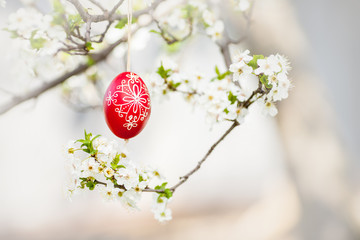 Easter traditional egg hanging on bough with cherry blossom