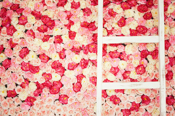 background full of white and pink roses