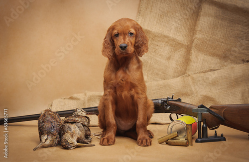 Puppy and hunting accessories