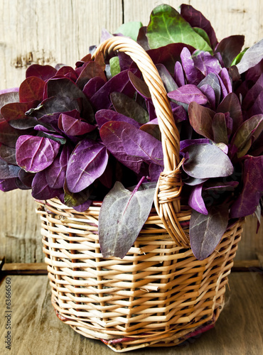 Orach in a Basket