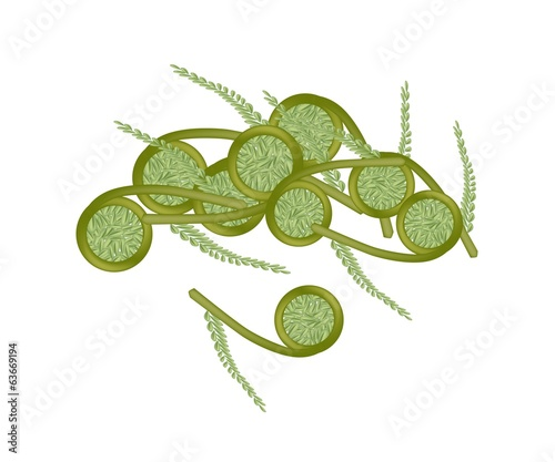 Fresh Green Fiddleheads Ferns on White Background
