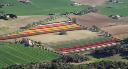 Tulipes et culture