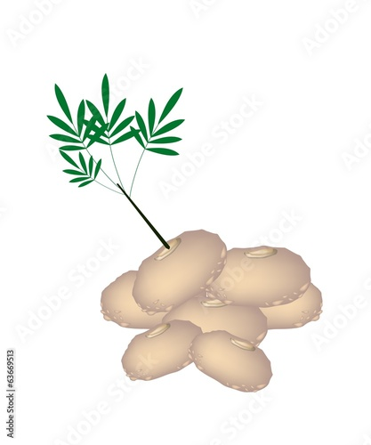 Stack of Fresh Elephant Yams on White Background
