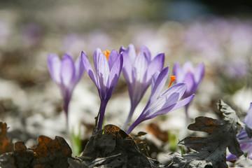 fiori: raggi di luce e trasparenza primaverili