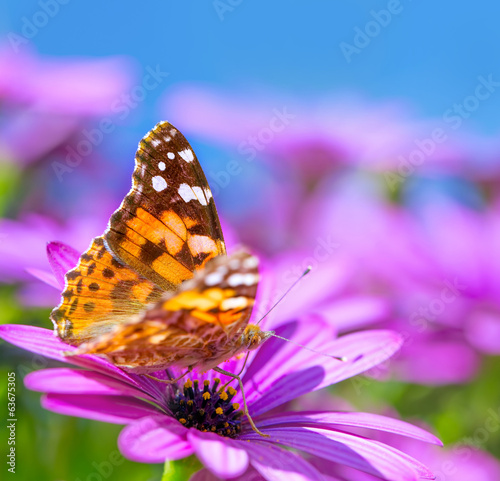Beautiful butterfly on purple flower