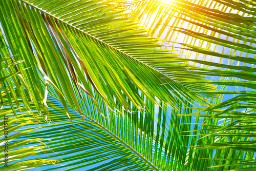 Fresh palm leaves background