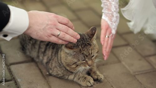 bride and groom stroking a cat