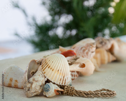 Colorful sea shells, shallow depth of field