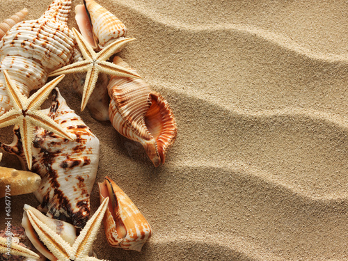 canvas print picture Sea shell on sand