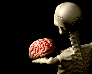Skeleton and Brain