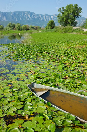 Water Lilies On Lake Skadar In Virpazar, Montenegro