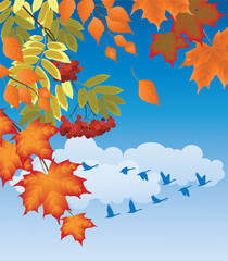 branches of autumn trees and birds flying south