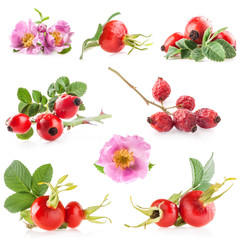 Rose hips (Rosa canina) flowers and fruits isolated on white