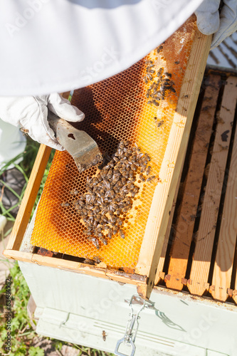 Beekeeper working in his apiary