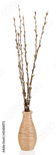Pussy-willow twigs in vase, isolated on white