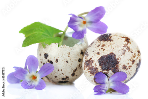 Easter composition with violets flowers in egg shells