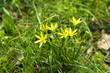 Beautiful spring grass with small flowers outdoors