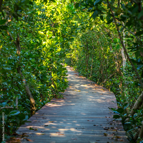 Boardwalk through the mangrove forest