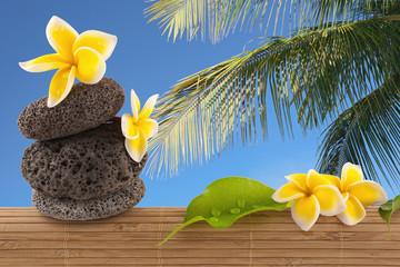 composition exotique : cocotier, galets et fleurs