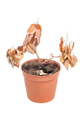 Single dead plant