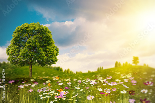 Bright summer afternoon on the meadow. Natural backgrounds