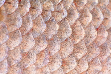Texture fish carp