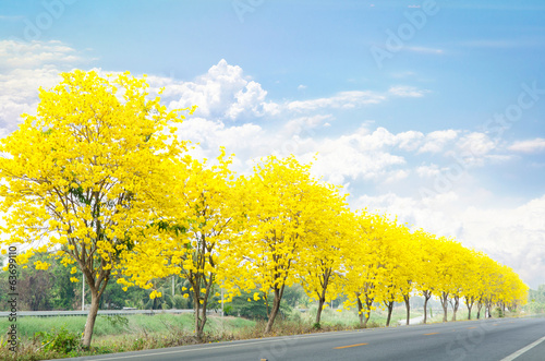 country road with yellow flowers