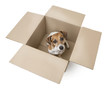 Little dog inside a cardboard box