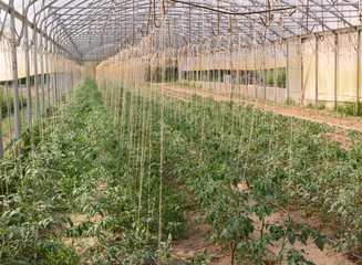 greenhouse for the cultivation