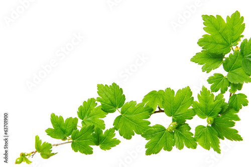 canvas print picture Green plants background.