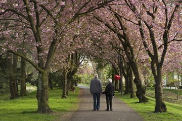 Kirschblüte mit Seniorenpaar