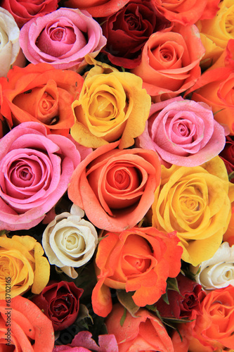 Multicolored wedding roses