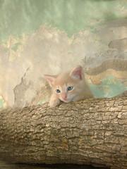 gato bebe sobre tronco