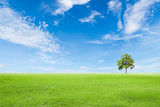 green grass field with tree and blue sky - Fine Art prints