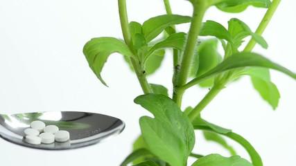 Stevia,frische Pflanze mit Stevia Tabletten