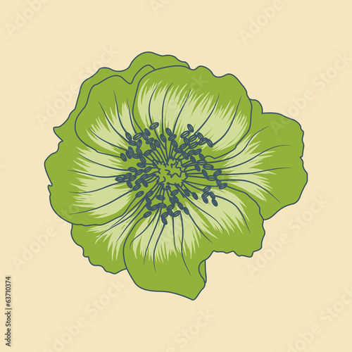 vector illustration of green flower