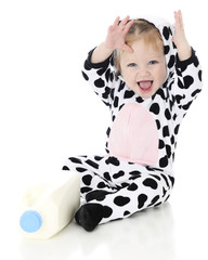 Holstein Delight