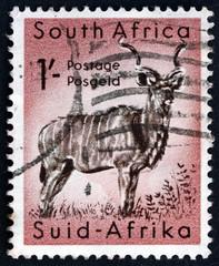 Greater Kudu, Tragelaphus Strepsiceros, Antelope, circa 1954