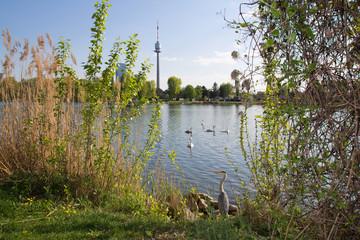 Graureiher an der Alten Donau Wien