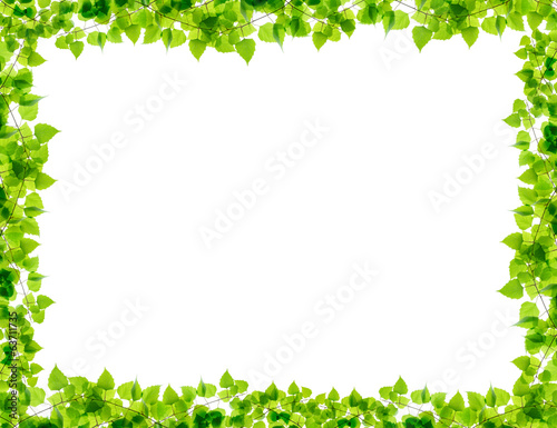 Green birch twigs frame
