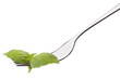 Fresh basil leaf  on fork isolated on white background cutout. H