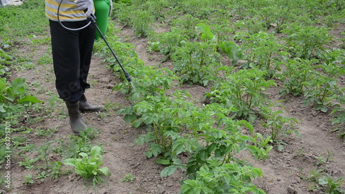 farmer spraying with pesticides potato from pests