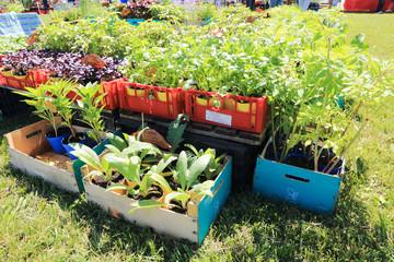 piante di stagione da piantare