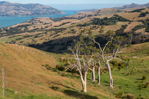 pastures above Banks Peninsula