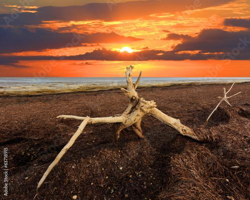 Fotobehang Overige old tree on Sivash dead sea