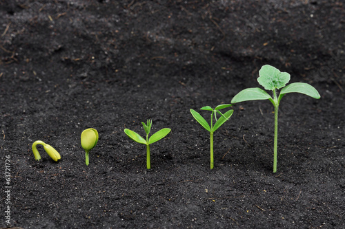 Sequence of seed germination on soil, evolution concept