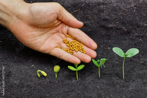 giving fertilizer to plants growing in germination sequence