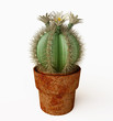 Blooming Cactus with White Flowers in 3D