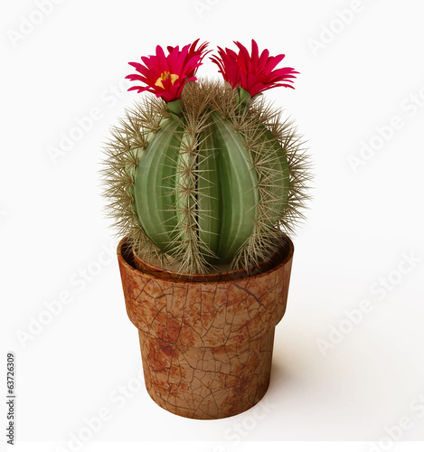 Blooming Cactus With Purple Flower in 3D
